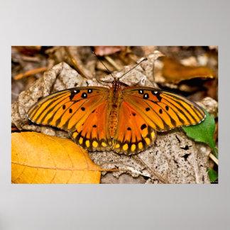 Fritillary-Golf-Schmetterlings-Erwärmung Wings Poster