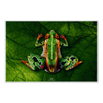 Frog by Johannes Stötter Poster