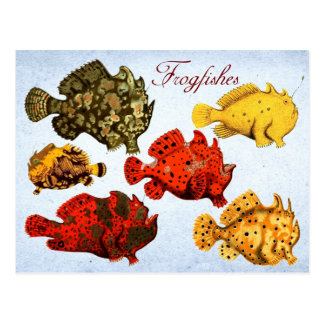 Frogfishes Postkarte