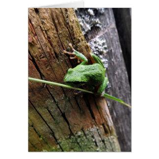 Froggy V Karte