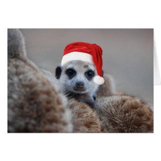 Frohe Meerkat Weihnachten - Frohe Festtage 2 Grußkarte