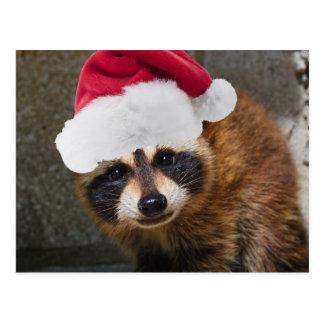 Frohe Waschbär-Weihnachten Postkarte
