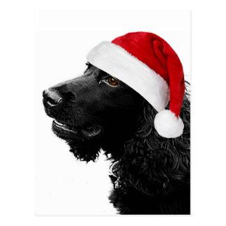 Frohe Weihnacht-Cockerspaniel Postkarten