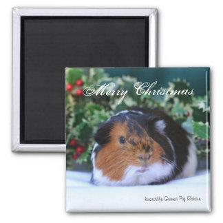 """""""Frohe Weihnacht-"""" Meerschweinchen-Magnet Quadratischer Magnet"""