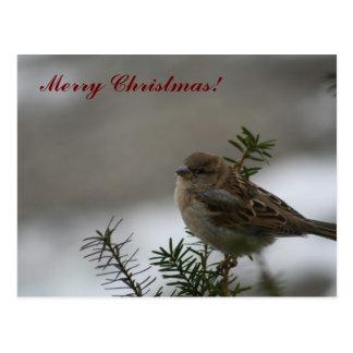 Frohe Weihnacht-Spatz! Postkarte