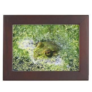 Frosch-Augen in einem Teich Erinnerungsdose