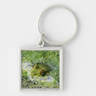 Frosch-Augen in einem Teich Schlüsselanhänger