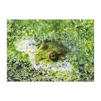 Frosch-Augen Leinwanddruck