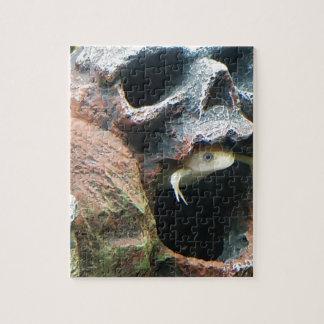 Frosch in einem Schädel Puzzle
