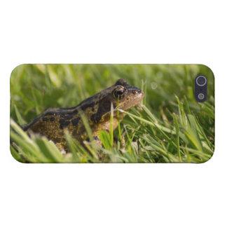 Frosch iPhone 5 Schutzhülle