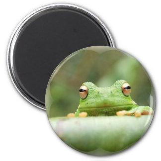 Frosch mustert Magneten Runder Magnet 5,7 Cm