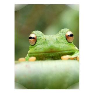 Frosch mustert Postkarte