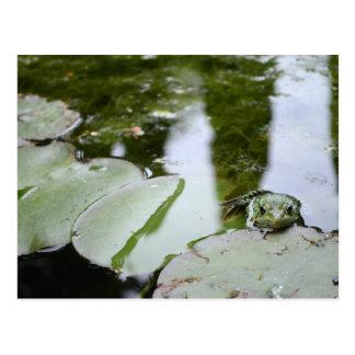 """Frosch sagt """"hallo """" postkarte"""