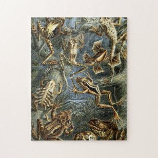 Frösche durch Ernst Haeckel Puzzle