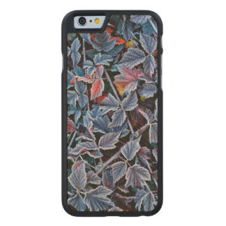 Frost auf Herbst-Blätter, Oregon Carved® iPhone 6 Hülle Ahorn