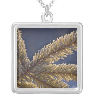Frost auf immergrünem Baum, Homer, Alaska Versilberte Kette