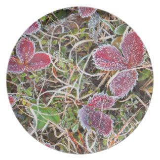 Frost bedeckte Blätter, Kanada Teller
