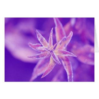 Frozen plant in purple grußkarte