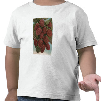 Frucht Chromo Lithographie von LoganberriesState Hemd