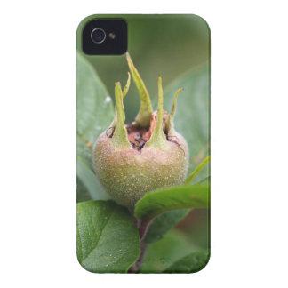 Frucht der allgemeinen Mispel iPhone 4 Cover