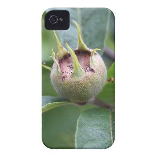 Frucht der allgemeinen Mispel iPhone 4 Hüllen