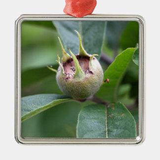 Frucht der allgemeinen Mispel Quadratisches Silberfarbenes Ornament