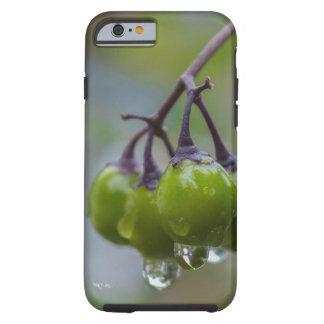 Frucht der Klarheit Tough iPhone 6 Hülle
