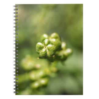 Frucht einer allgemeinen Rue (Ruta graveolens) Notizblock