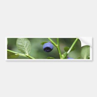 Früchte der europäischen Blaubeere Autoaufkleber