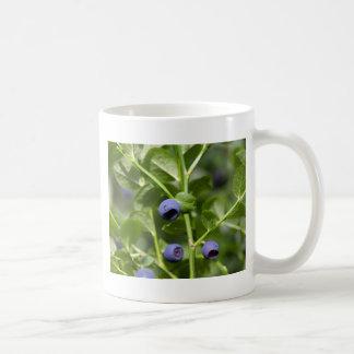 Früchte der europäischen Blaubeere Kaffeetasse