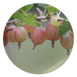 Früchte einer Stachelbeere Melaminteller