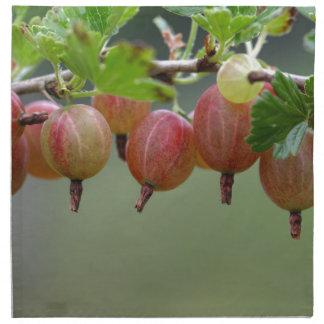Früchte einer Stachelbeere Stoffserviette
