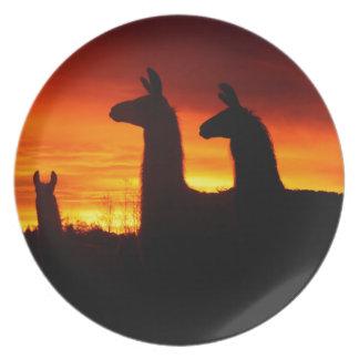 Früher Morgen-Lamas Teller
