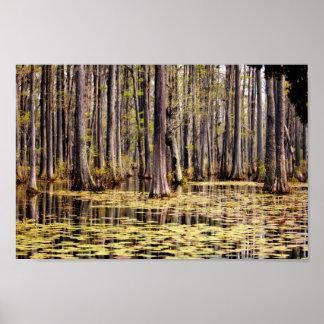 Frühling auf Zypresse-Sumpf Poster