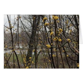 Frühling blüht Baum-Central Park See New York Karte