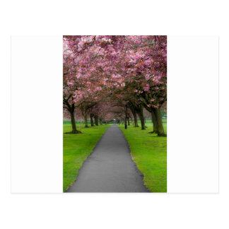 Frühling im Park Postkarten
