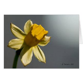 Frühling ist entsprungen! mitteilungskarte