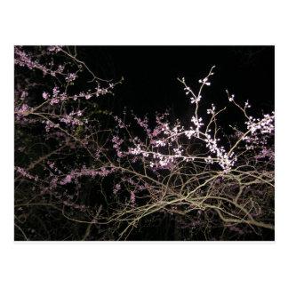 Frühling redbud nachts postkarte