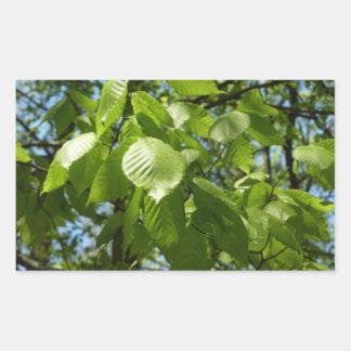 Frühlings-Birke verlässt grünen Baum Rechteckiger Aufkleber