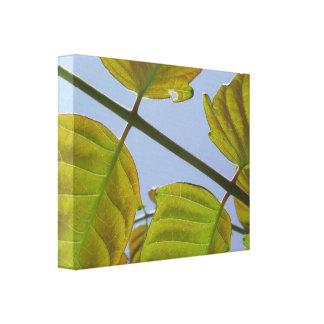 Frühlings-Blätter wickelte Leinwand ein Gespannter Galeriedruck