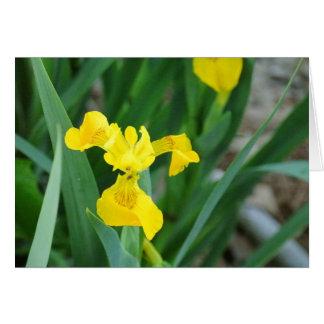 Frühlings-Blume Karte