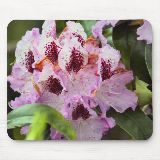 Frühlings-Blume Mousepads
