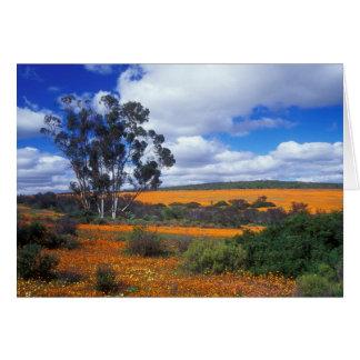 Frühlings-Blumen in Namaqualand, Südafrika Karte