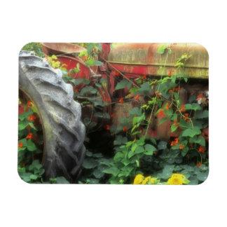 Frühlings-Blumen schmücken einen alten Traktor Rechteckige Magnete