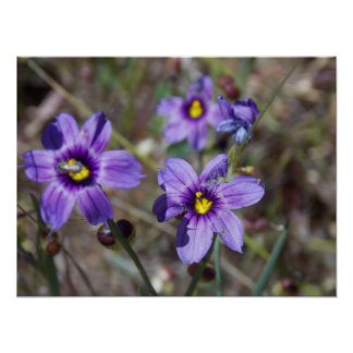 Frühlings-Blumen sind entsprungen Poster