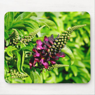 Frühlings-Blüte Mousepad