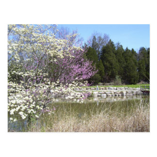 Frühlings-Blüten Postkarte
