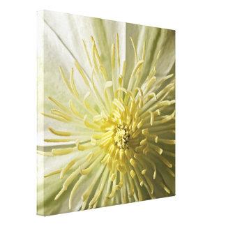Frühlings-Elfenbein-Blumendetail-Leinwand Leinwanddruck