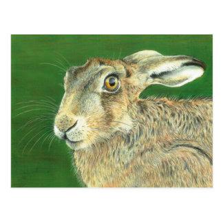 Frühlings-Hasen Postkarte