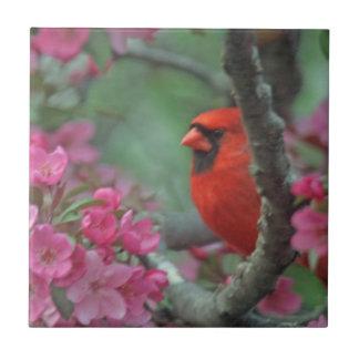 Frühlings-Kardinal Fliese